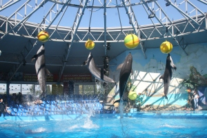 A show at the Dolphinarium.