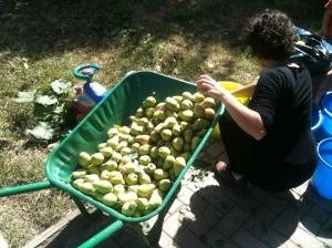 Pears Abby