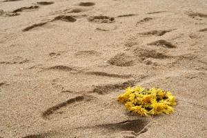 sand on seashore